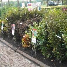 Tuincentrum Klein