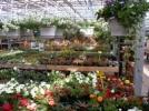 Tuincentrum Hollander B.V. - Breezand